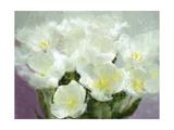 Sunlit Tulips I