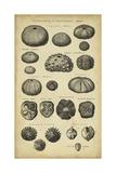 Study of Shells III