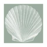 Seabreeze Shells II Reproduction d'art par Vision Studio