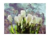 Sunlit Tulips II