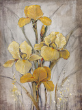 Golden Irises I Reproduction d'art par Tim O'toole