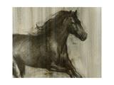 Dynamic Stallion I