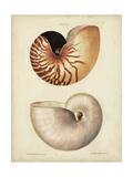 Antique Nautilus I Reproduction d'art par George Wolfgang Knorr