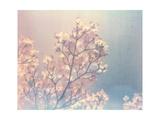 Flowering Dogwood I