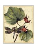 Petite Dragonflies I