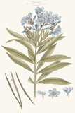 Bashful Blue Florals III
