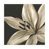 Classical Blooms III