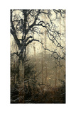 Wooded Solace I
