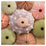 Sea Urchin Group Reproduction d'art par Bramwell
