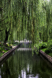 The Branches of a Weeping Willow Tree, Salix Babylonica, Hanging over a Calm Waterway Papier Photo par Jonathan Irish