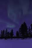 The Northern Lights or Aurora Borealis over Silhouetted Evergreen Trees in a Snowy Landscape