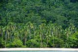 Tropical Rainforest and Palm Trees Line a Beach on a Deserted Island