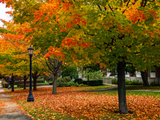 Colorful Sugar Maple Trees in Autumn Hues on the Grounds of Bates College