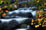 Water Pouring over Rocks in a Stream Framed by Maple Leaves in Autumn Hues