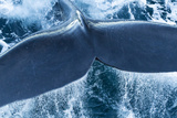 The Tail of a Right Whale Papier Photo par Michael Melford