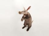 An Aardvark  Orycteropus Afer
