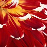 Colourful Floral I
