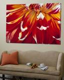 Passionate Bloom Toile Murale Géante par Yvonne Poelstra-Holzaus