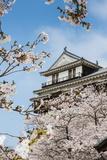 Cherry Blossom in the Matsuyama Castle  Shikoku  Japan  Asia