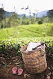 Tea Pluckers Basket and Shoes at a Tea Plantation