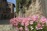 Volpaia  a Hill Village Near Radda  Chianti  Tuscany  Italy  Europe