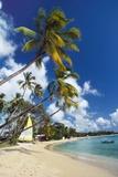 Mullins Beach  St Peters Parish  Barbados  Caribbean