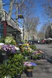 Flower Stall on Las Ramblas  Barcelona  Catalunya  Spain  Europe