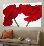 Loving Poppies Toile Murale Géante par Yvonne Poelstra-Holzaus