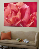 Shinning Pink Rose Toile Murale Géante par Yvonne Poelstra-Holzaus