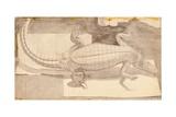 Alligator  1948