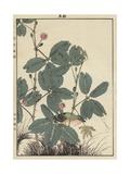 Sensitive Plant  Olive Sparrow