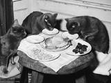Cats' Celebratory Feast Papier Photo