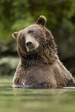 Brown Bear, Katmai National Park, Alaska Papier Photo