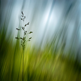 Morning Grass Papier Photo par Ursula Abresch