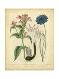 Garden Flora VIII