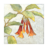 Fuchsia Blooms I Reproduction d'art par Megan Meagher