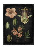 Study in Botany I Reproduction d'art par Vision Studio