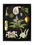 Study in Botany III Reproduction d'art par Vision Studio