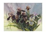 Hadfield Irises IV