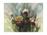 Hadfield Irises VI