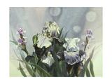 Hadfield Irises III
