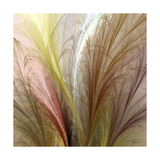 Fountain Grass II