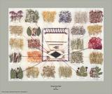 Tableau des teintes Navajo Reproduction d'art par Ella Myers