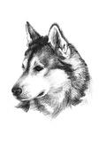 Canine Study III