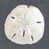 Shell on Slate II Reproduction d'art par Megan Meagher