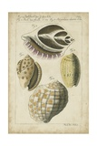 Vintage Shell Study I Reproduction d'art par Martini