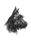 Canine Study II
