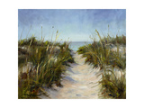 Seagrass and Sand