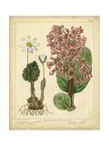 Garden Flora III