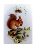 Red Squirrel with Primroses and Violets